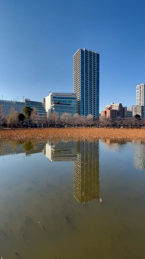 A Lake with a City Background