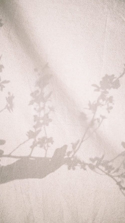 A Shadow of a Hand Holding a Plant