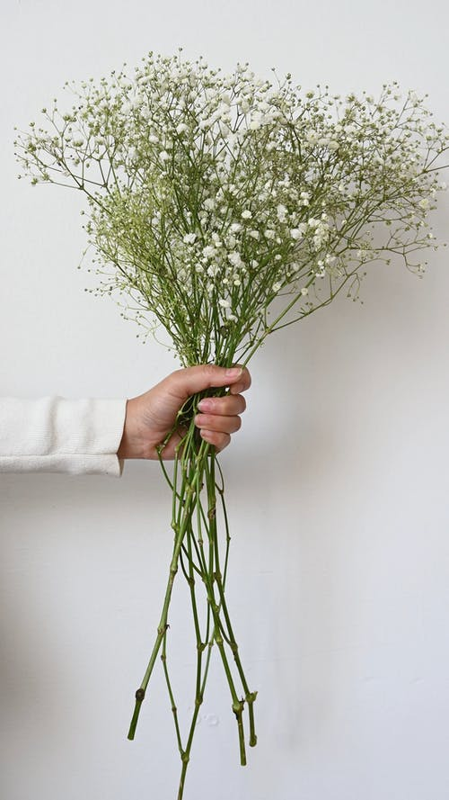 A Person Holding Flowers
