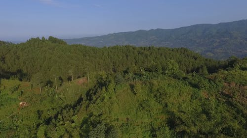 Drone Footage of a Forest in the Mountain