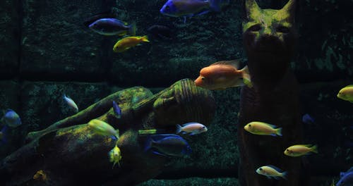 Colorful Fishes Underwather
