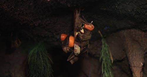 Video of a Bats Feeding