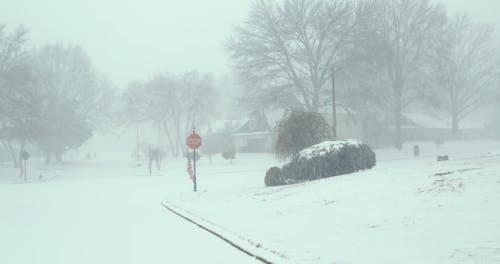 Video of a Snowstorm