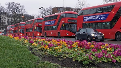 Buses Parked on the Road