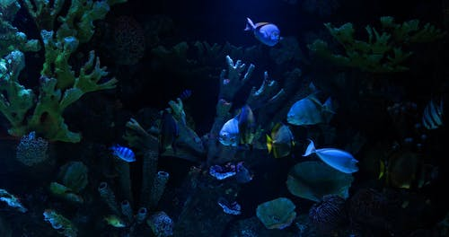 Colorful Fishes In An Aquarium