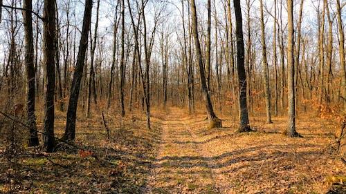 A Leafless Woodland