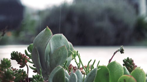 Close Up Shot of Rain Falling in to the Plants