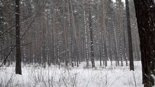 Heavy Snowing in the Woods