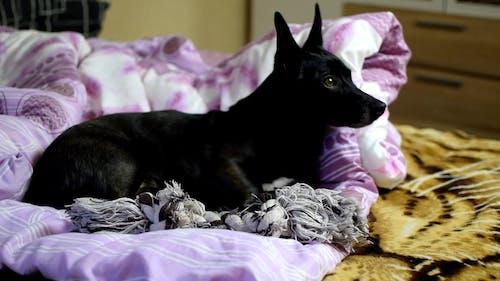 A Dog Lying Down in a Blanket