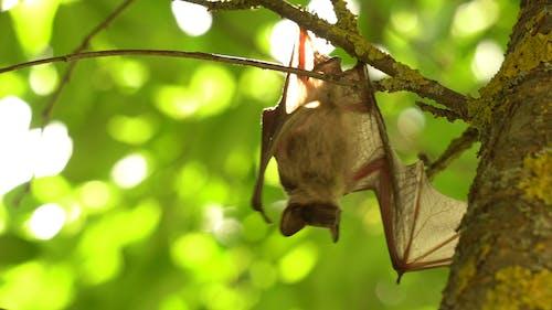 Video of a Bat Hanging Upside Down