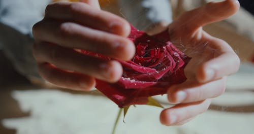 A Boy Covering A Rose Flower With His Hands