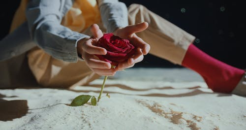 A Boy Protecting A Rose Flower From The Hands