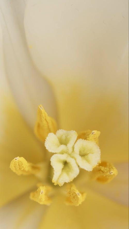 Pollen Grain of a Flower