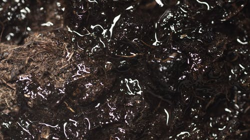 Close Up Video of a Wet Soil
