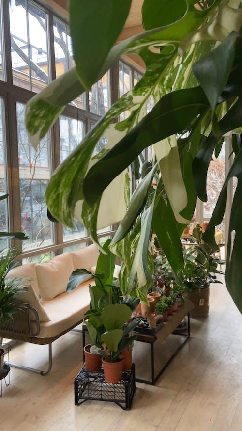 Living Room Full of House Plants