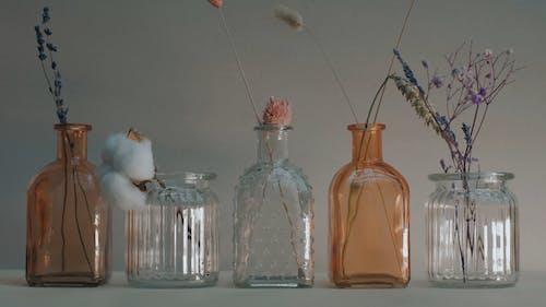 Ornamental Plants Inside the Jars and Bottles