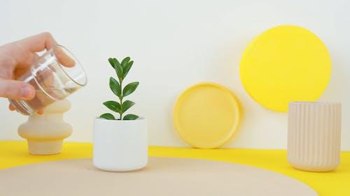 A Person Watering Decorative Plant