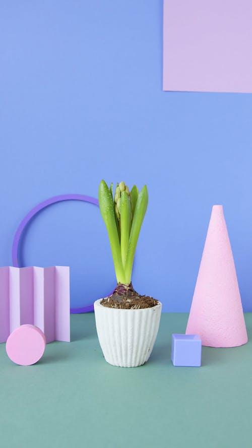 Studio Shot of a Decorative Plant