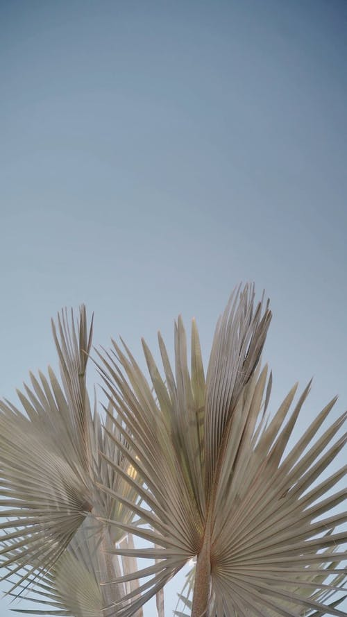 Palm Leaves and the Sky