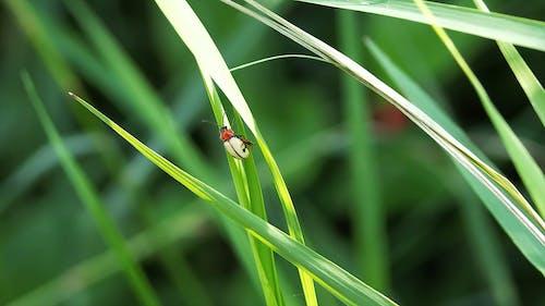 A Bug on a Green Leaf