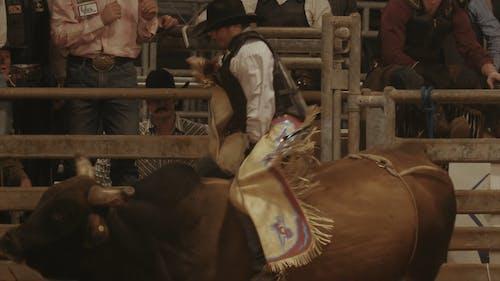 A Man Riding a Bucking Bull