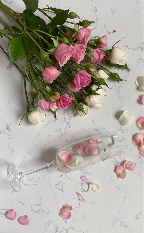 Immagine gratuita di bellissimo, bianco, bicchiere di champagne