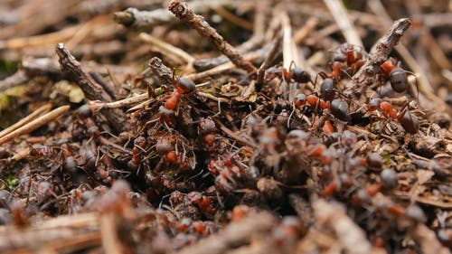 Close up Shot of Ants in the Ground