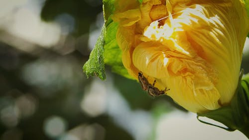 Spider Crawling on the Yellow Flower