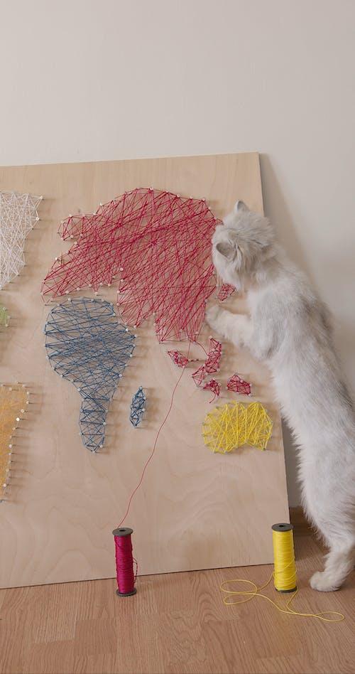 Curious Cat Exploring a World Map