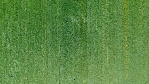 Drone Footage of a Grassland