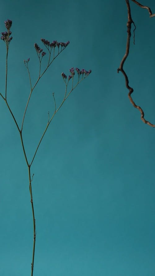 Branches and Dried Flowers Swaying