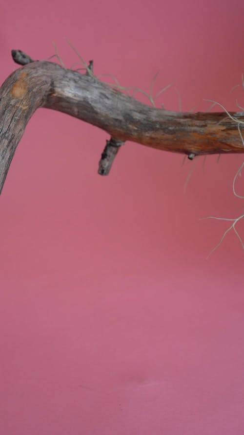 A Branch of a Tree and a Plant
