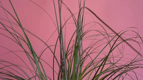 Sedge Green Grass