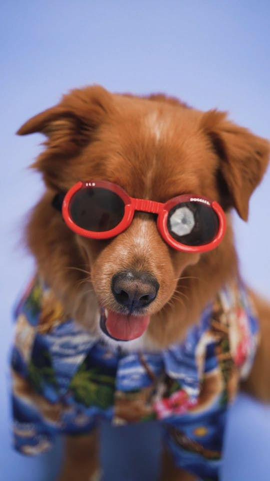 A Dog With Red Sunglasses