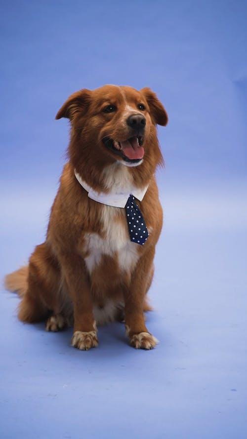 Dog Wearing a Costume