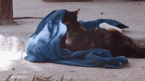 A Playful Cat Lying Down a Towel