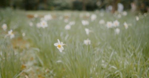 Field Full of Flowering Plant