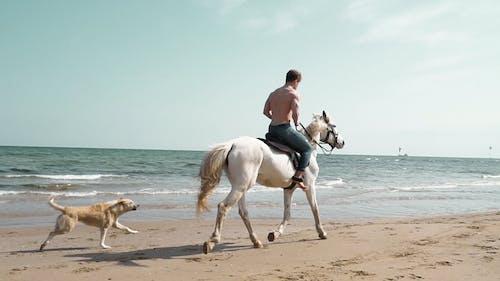 Man Riding a Horse in a Beach