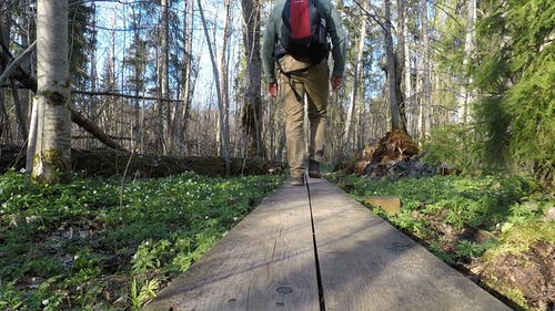 Hiker on the Woods
