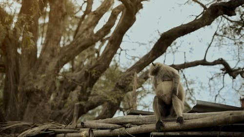 A Monkey Sitting on a Roof