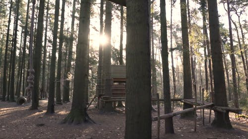 A Tree House in the Woods