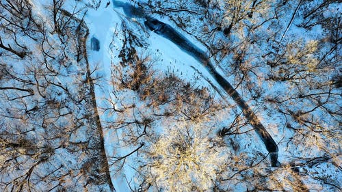 Drone Footage of a Forest During Winter