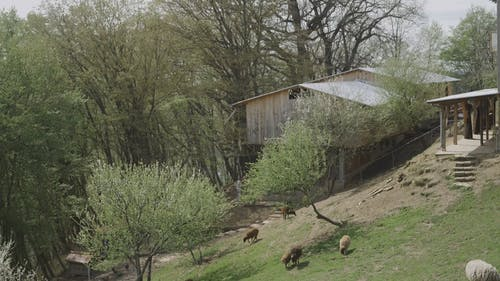 Video of a Farm with Animals