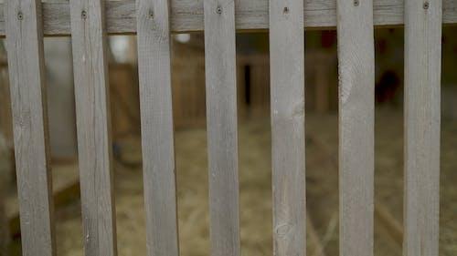 A Sheep in Barn