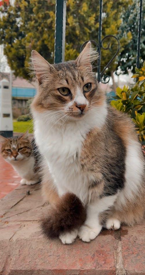 Close-Up Shot of a Cat