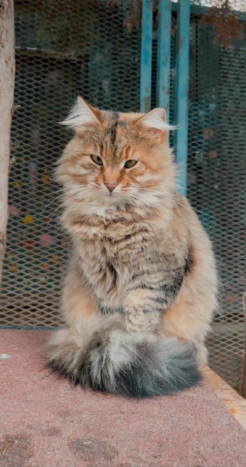 Portrait Shot of a Cat