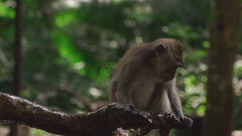 Wild Monkey Standing on Tree Branch