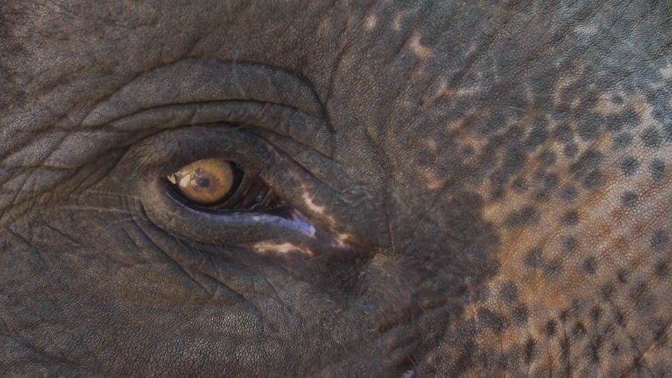 Close Up View Of An Elephant S Eye