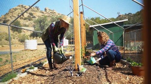 Women Watering the Plants