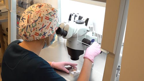 Scientist Analyzing Samples Through Microscope